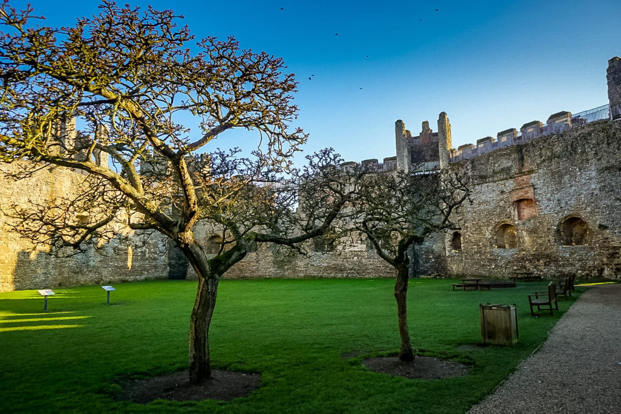 Trees inside Framlingham Castle