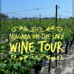 "vineyards in near Niagara with text overlay ""niagara on the lake wine tour"""