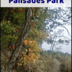 "palisades interstate park with text overlay ""go for a hike in Palisades Park"""