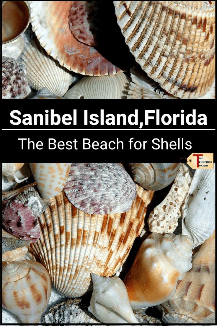 Headed to Sanibel Island Florida?  Click to learn about the best beaches to find Sanibel Island shells plus other things to do during your day trip to Sanibel Island. | Sanibel Island Things to Do |  Sanibel Island Florida Things to Do | Sanibel Beaches | Sanibel Bridge | Sanibel Beach Florida | Sanibel Shells | Sanibel Shelling | Sanibel Shell Museum | Sanibel Island Day Trip | Florida Sanibel Island | Florida Shelling Beaches | Shelling in Florida #florida #usa #beach