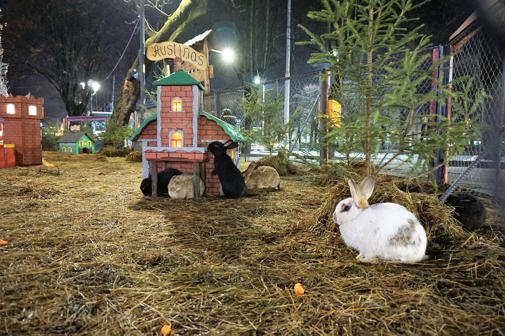 "Real live rabbits at the Esplanade Park Christmas Market. -""Riga Christmas Market Fun"" - Two Traveling Texans"