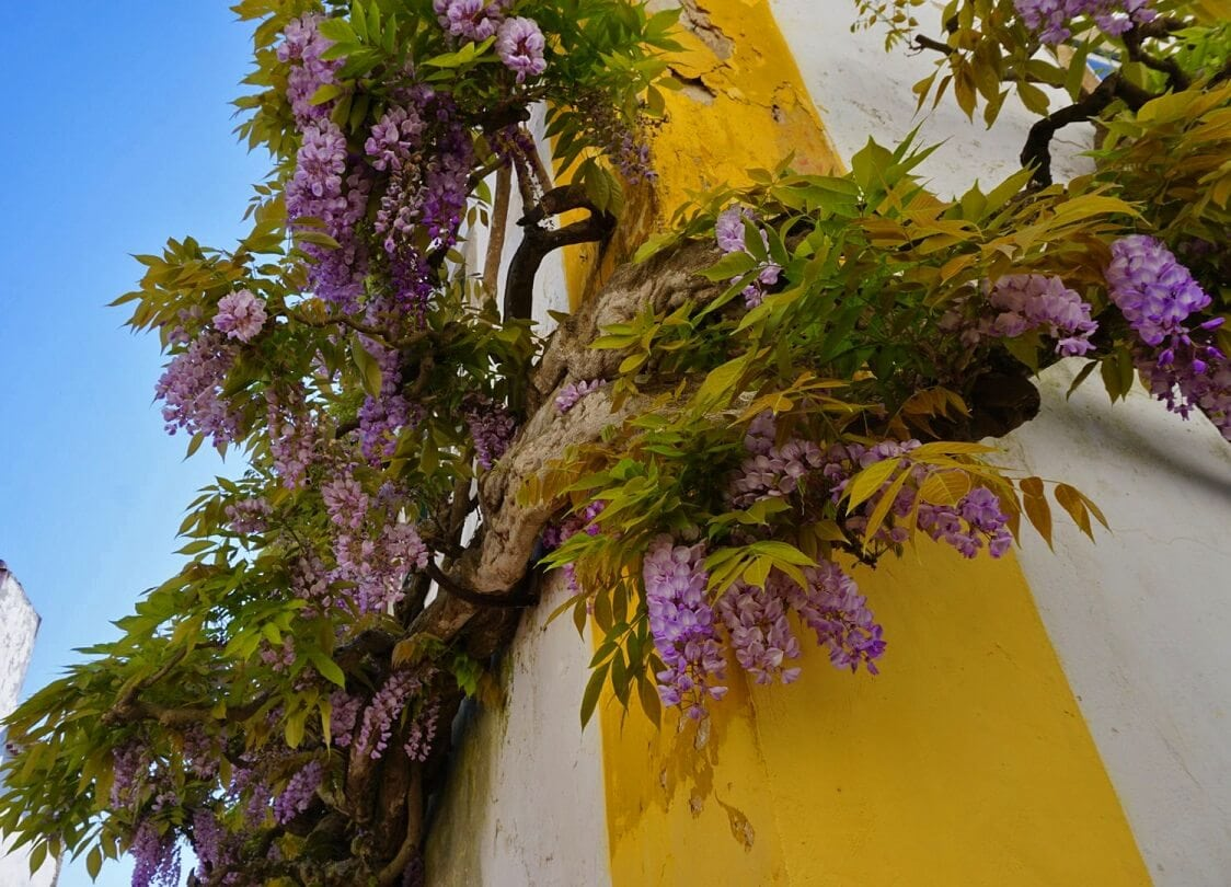 The flowers added a nice pop of color to the white-washed walls of the Obidos. -