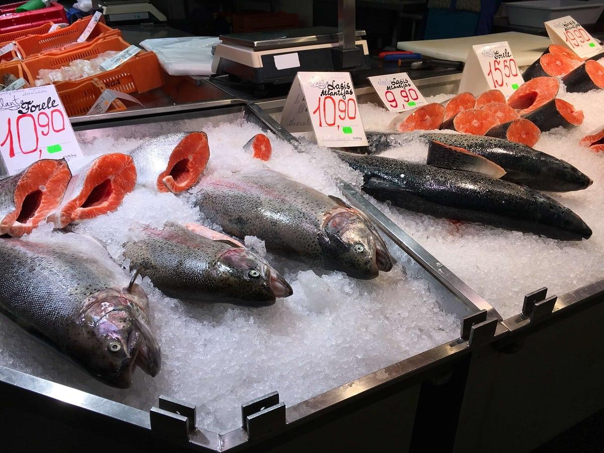 Lots of fresh salmon! -