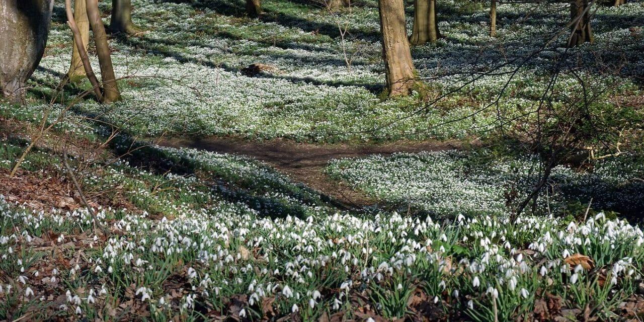 Walsingham Pilgrimage and Snowdrops Walk