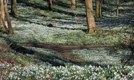 Walsingham Pilgrimage and Snowdrops Walk