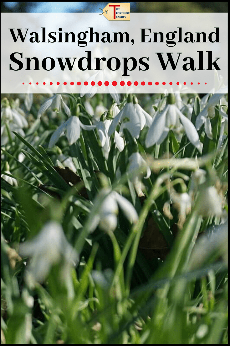 snowdrop flowers with text overlay