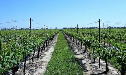 Discovering Wineries in Niagara on the Lake Canada