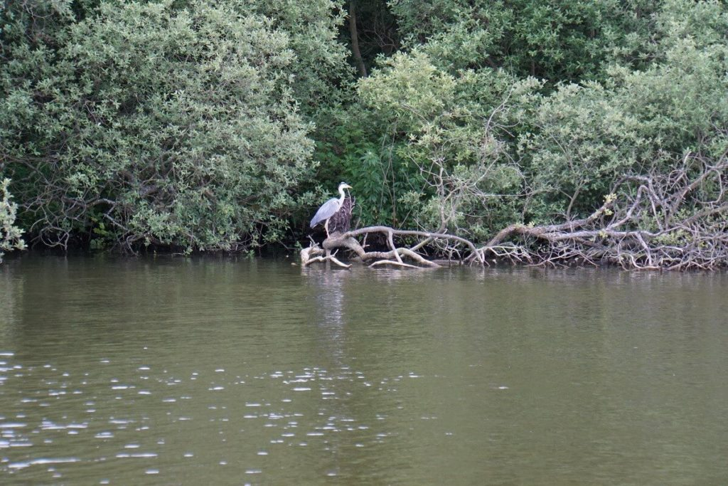 "We spotted a pretty heron! - ""Hire a Boat on the Norfolk Broads"" - Two Traveling Texans"