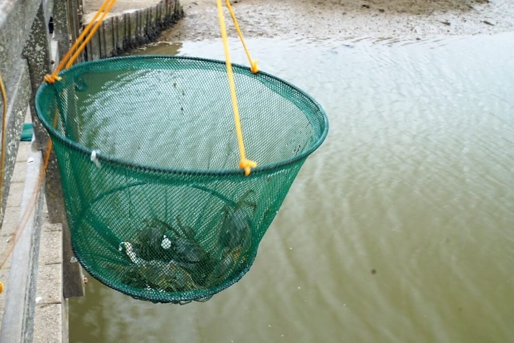 I was impressed with how many crabs there were! - Walberswick Crabbing - Two Traveling Texans