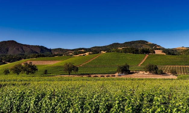 Things to Do in Napa Valley Besides Wine Tasting