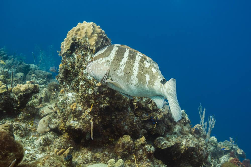 The water in Nassau is ideal for spotting fish! - Snorkeling in Nassau