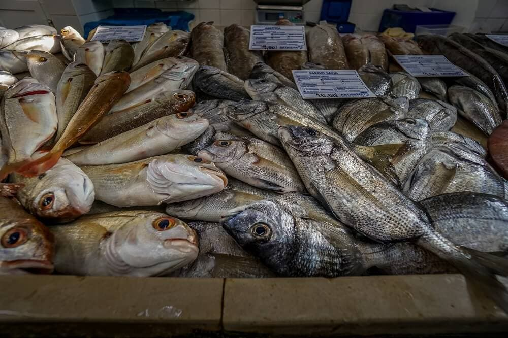 Fish from the Armacao de Pera market