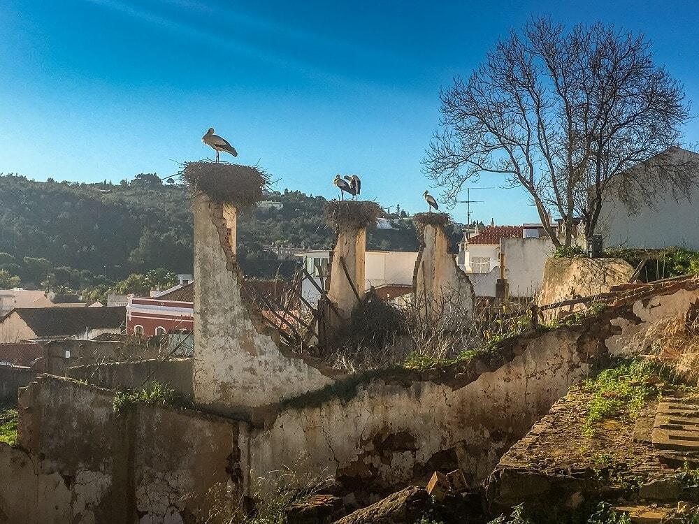 Storks in Silves