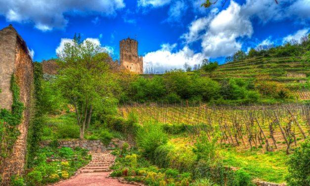 The Best Colmar Wine Tasting Tour Options