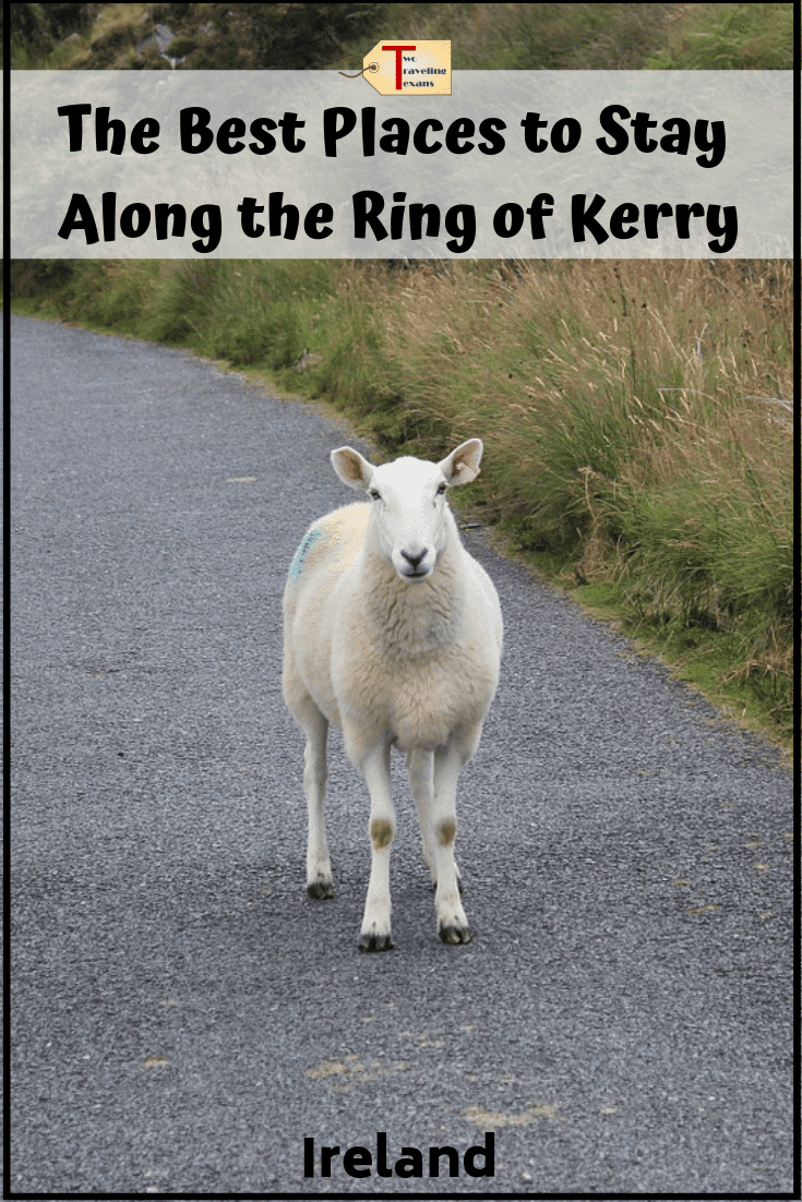 sheep on the road with text