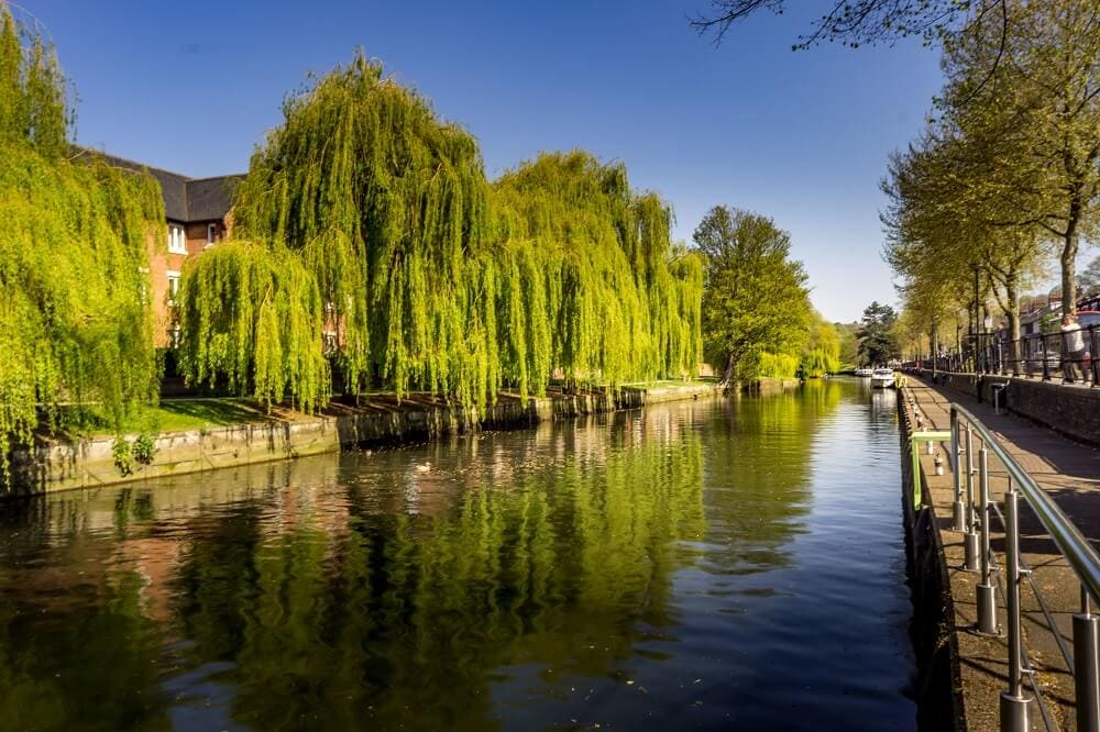 Weeping willow trees along the Riverside Walk in Norwich