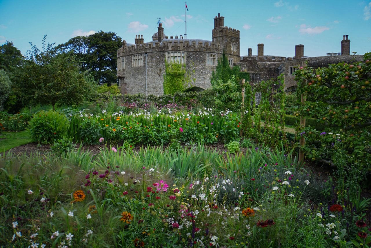 flowers in the foreground with Walmer Castle