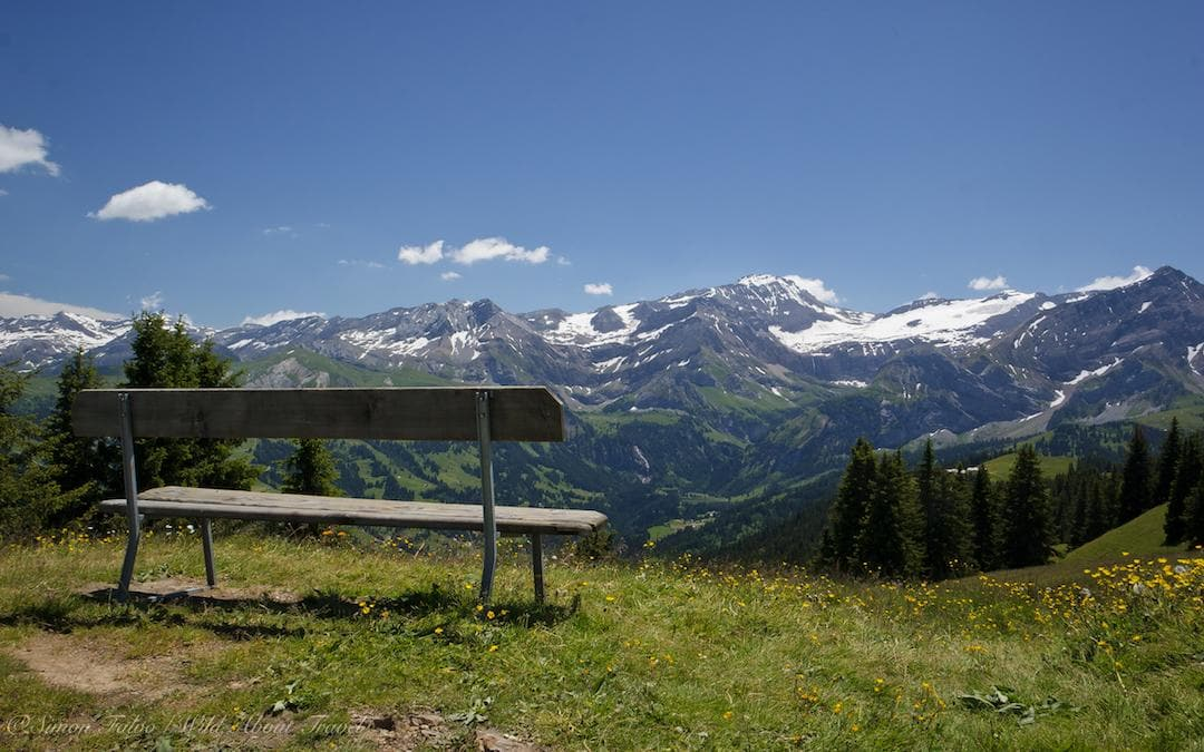 view of the snow-covered alps in gstaad switzerland