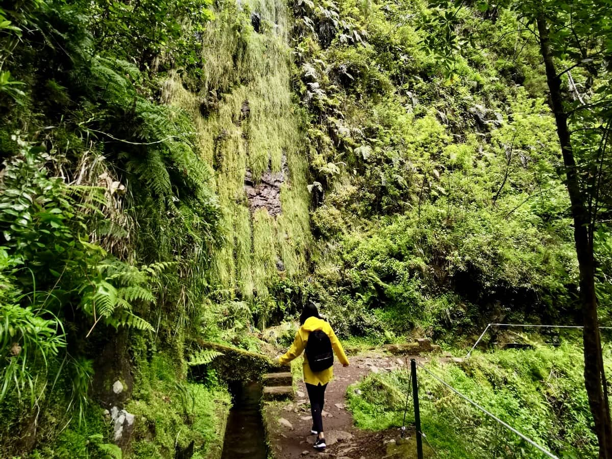 scenery along the Levada do Rei hike in Madeira portugal