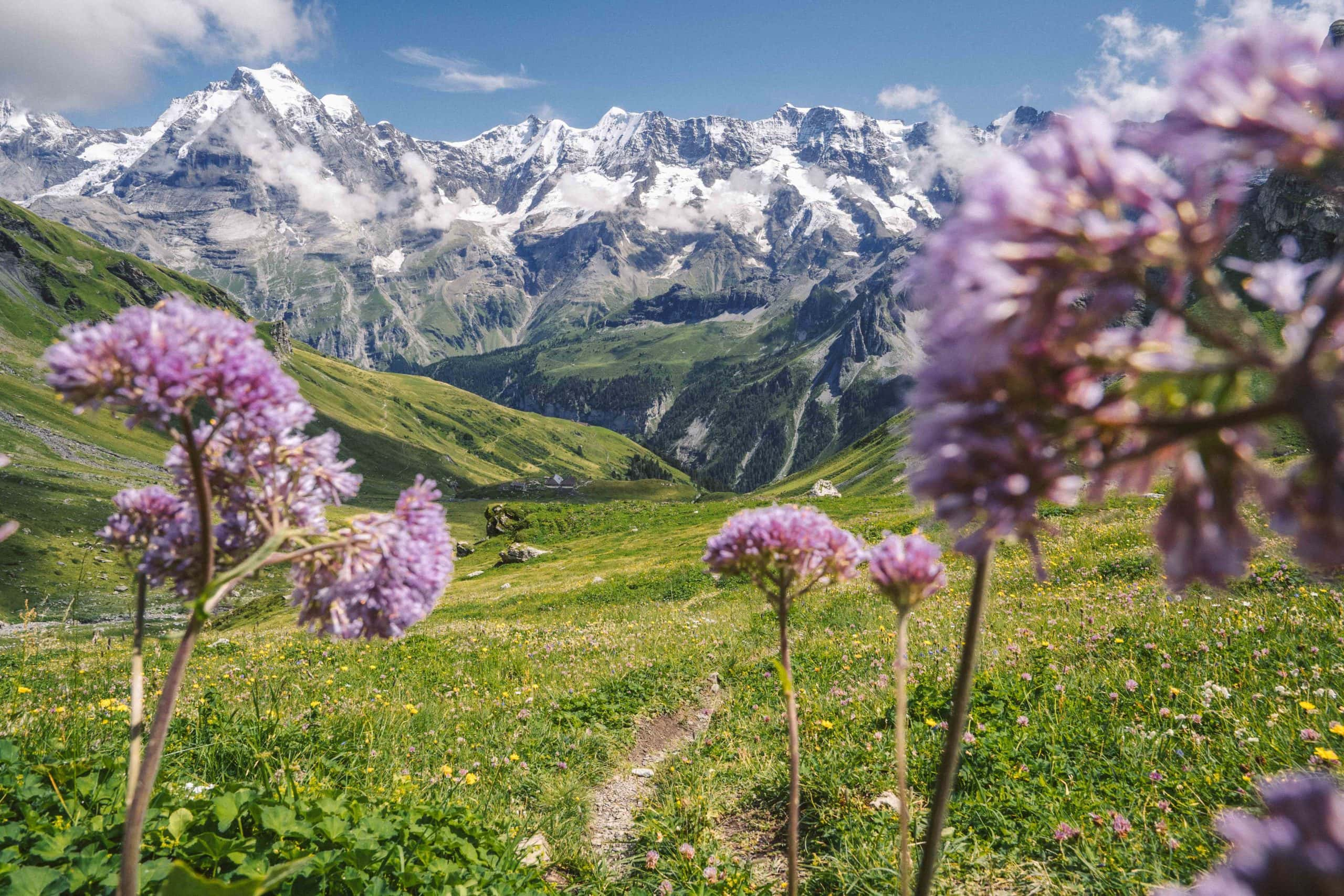 flowers and mountain view during Schilthorn hike in Switzerland
