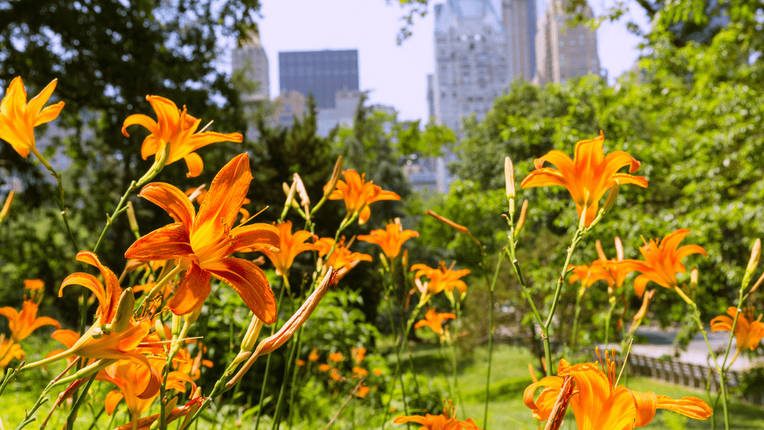 17 Best Things to Do in NYC in the Spring