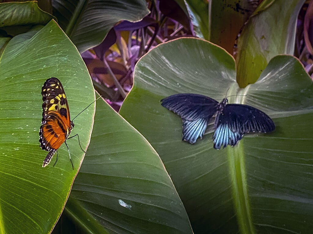exotic butterflies inside the butterfly house at blenheim palace