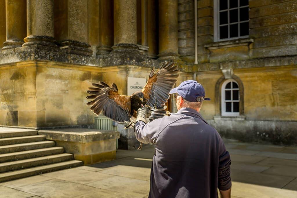 man with a hawk