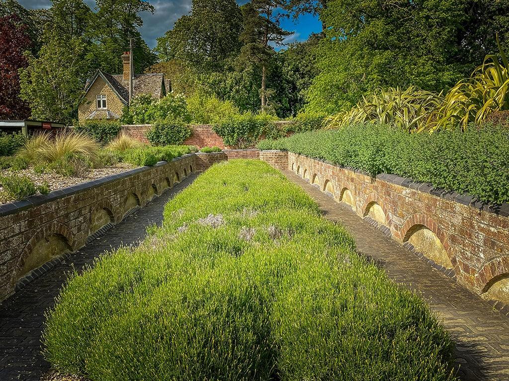 lavender garden at blenheim palaceeim pa